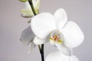 B-014-orchidee